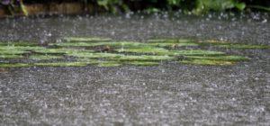 Regen in de vijver: goed of slecht?