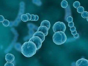 nitrificerende bacterien vijver