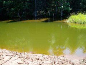 Algen in de vijver: zweefalgen - groen water